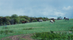 <img SRC= http://www.horsetrue.com/images/horsehill.jpg>