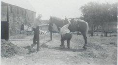 <img SRC= https://www.horsetrue.com/images/gpa.jpg>