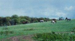 <img SRC= https://www.horsetrue.com/images/horsehill.jpg>